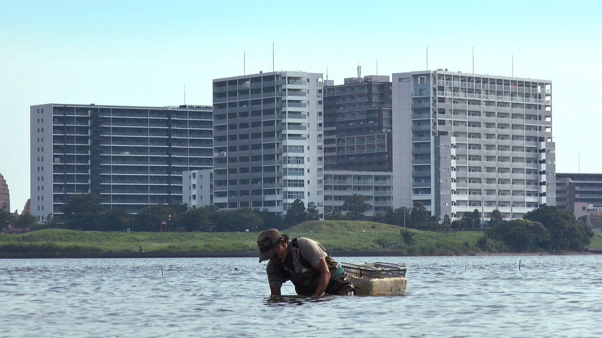 東京干潟場面写真